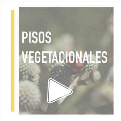 Laboratorio Vegetal Pisos Vegetacionales Nativos